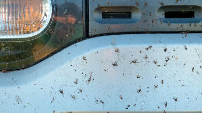 RIVESALTES : Un appel aux dons pour sauver les moustiques écrasés sur les pare-brises a été lancé